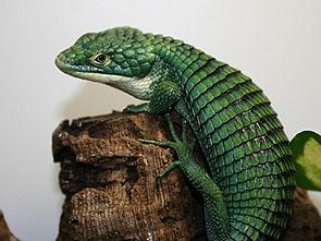 緑色のトカゲ