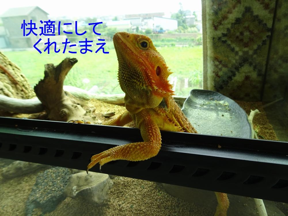 爬虫類館 開業にむけて