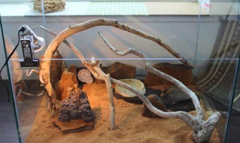 爬虫類 ケージ 自作