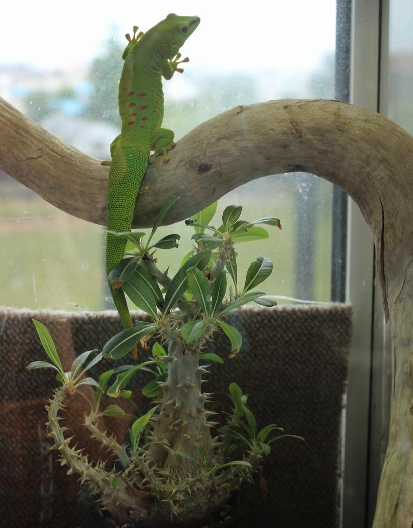 ヒルヤモリ 植物
