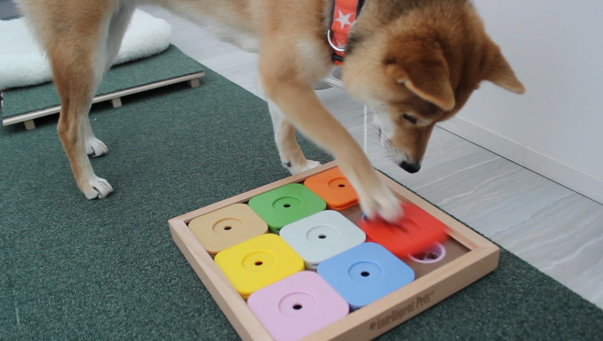 犬 室内遊び